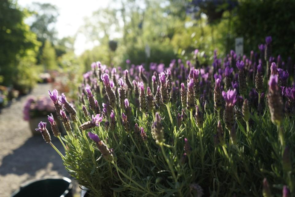 Garten gestalten mit wenig Geld: Pflanzen