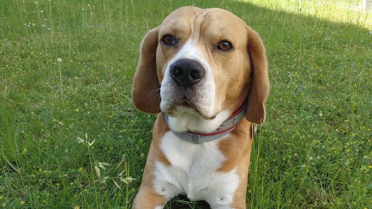 Hunde hinter der Marke Dr. Klein: Hugo