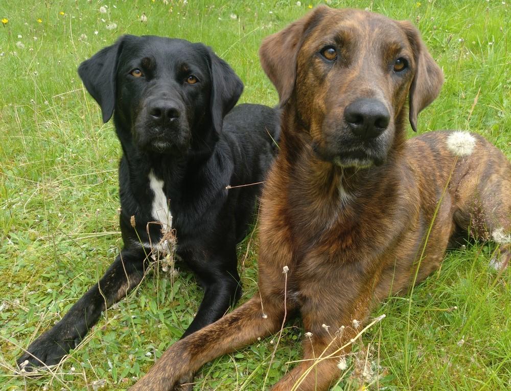 Hunde im Büro: Das Ehepaar