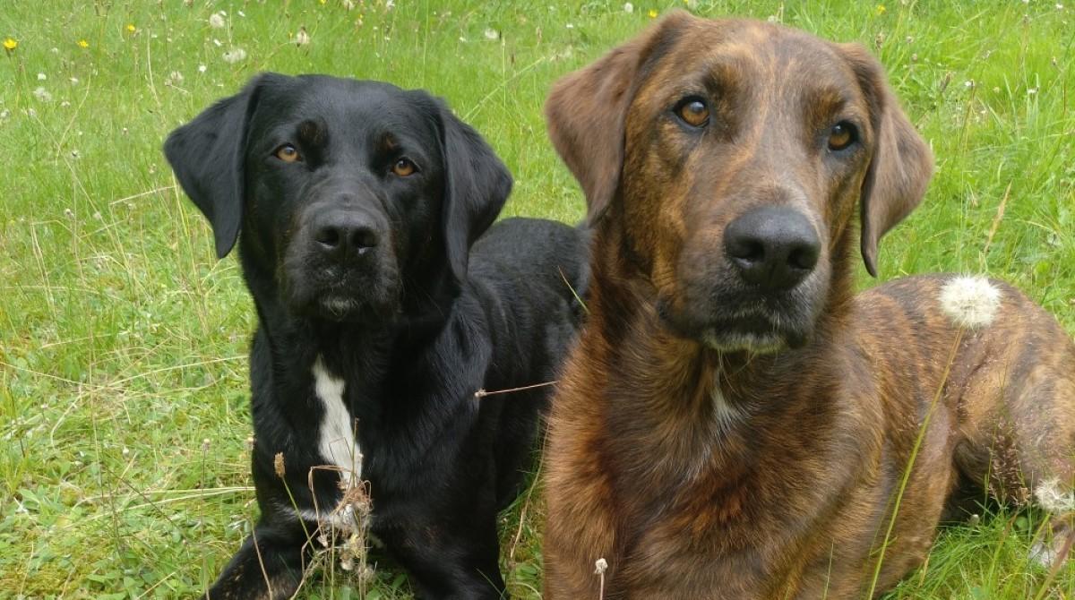 Hunde im Büro: Milow und Kiara