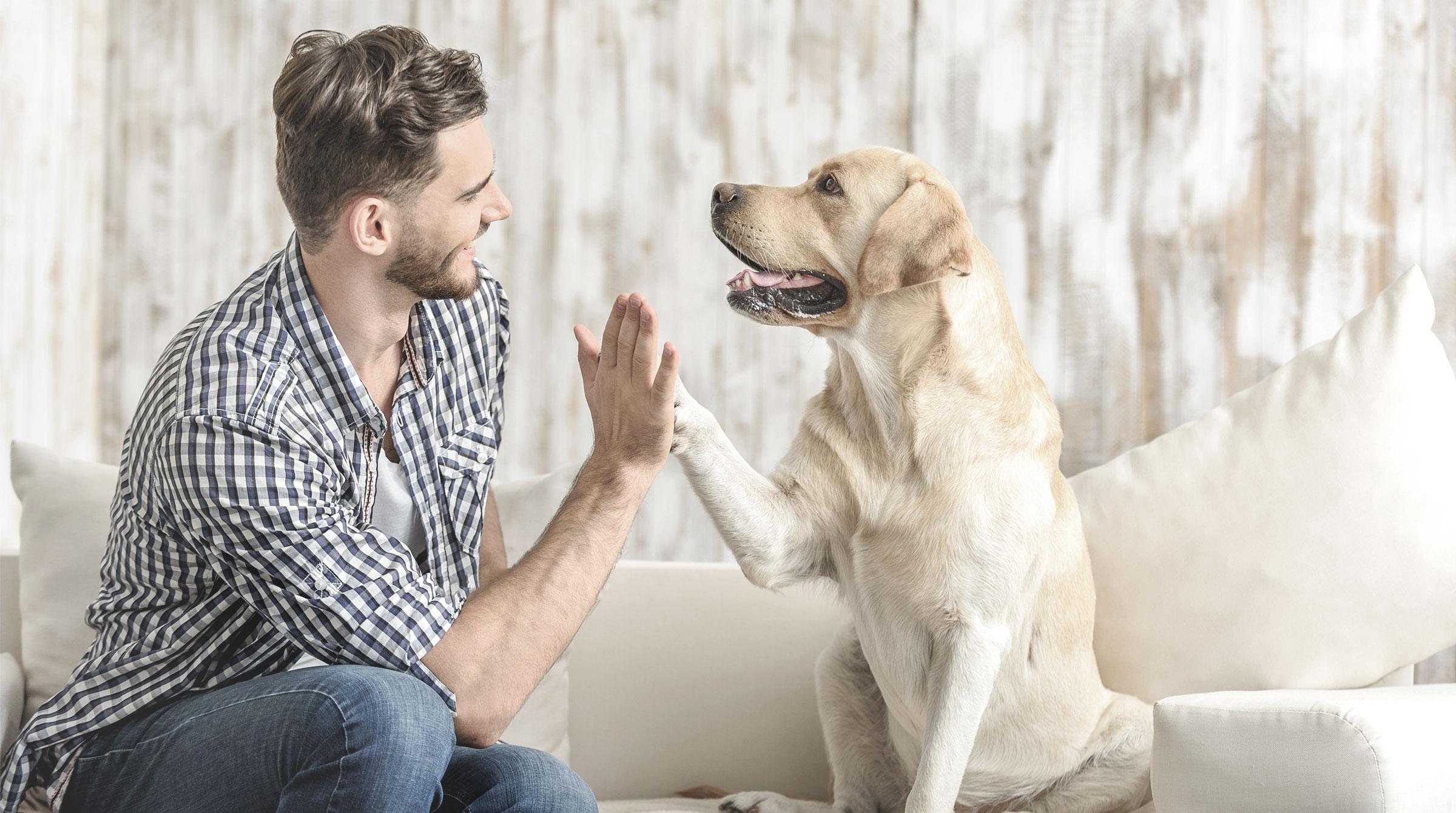 Introbild Hundehaftpflichtversicherung