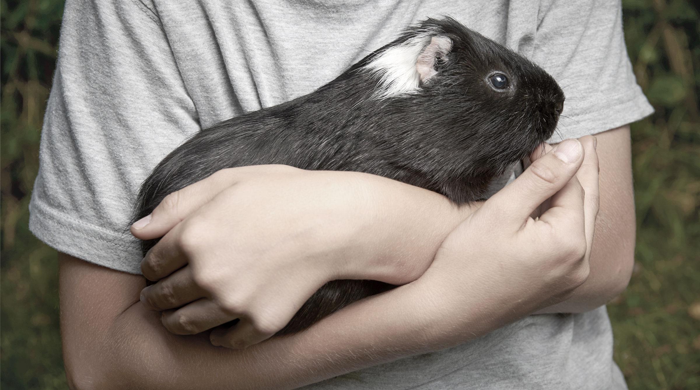 Tierhalterhaftpflicht für Kleintiere